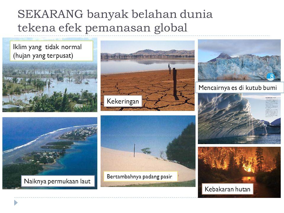 SEKARANG banyak belahan dunia tekena efek pemanasan global Bertambahnya padang pasir Kekeringan Naiknya permukaan laut Iklim yang tidak normal (hujan