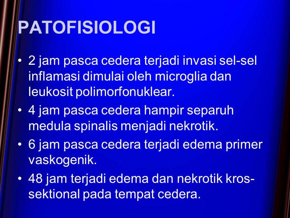PATOFISIOLOGI 2 jam pasca cedera terjadi invasi sel-sel inflamasi dimulai oleh microglia dan leukosit polimorfonuklear.