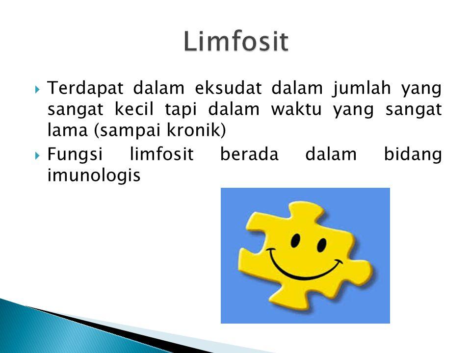 Terdapat dalam eksudat dalam jumlah yang sangat kecil tapi dalam waktu yang sangat lama (sampai kronik)  Fungsi limfosit berada dalam bidang imunologis
