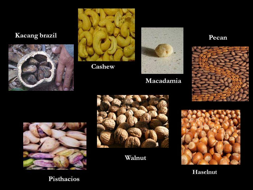 Kacang brazil Cashew Macadamia Pecan Pisthacios Walnut Haselnut