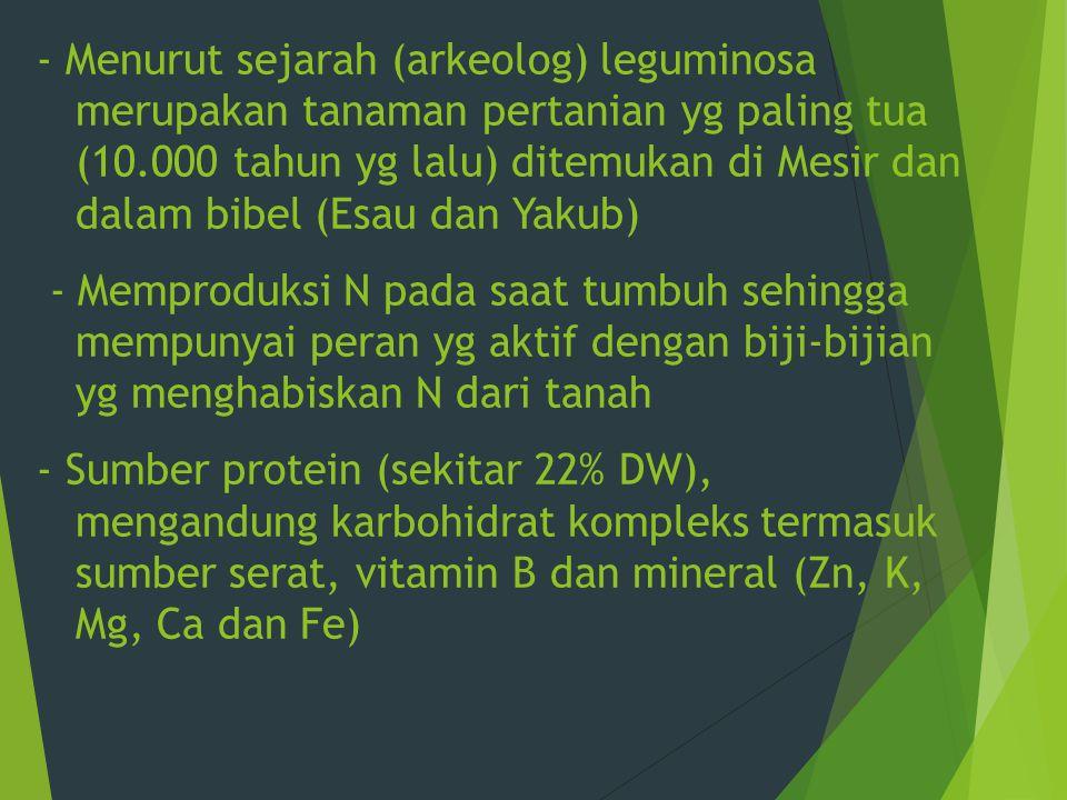 - Menurut sejarah (arkeolog) leguminosa merupakan tanaman pertanian yg paling tua (10.000 tahun yg lalu) ditemukan di Mesir dan dalam bibel (Esau dan