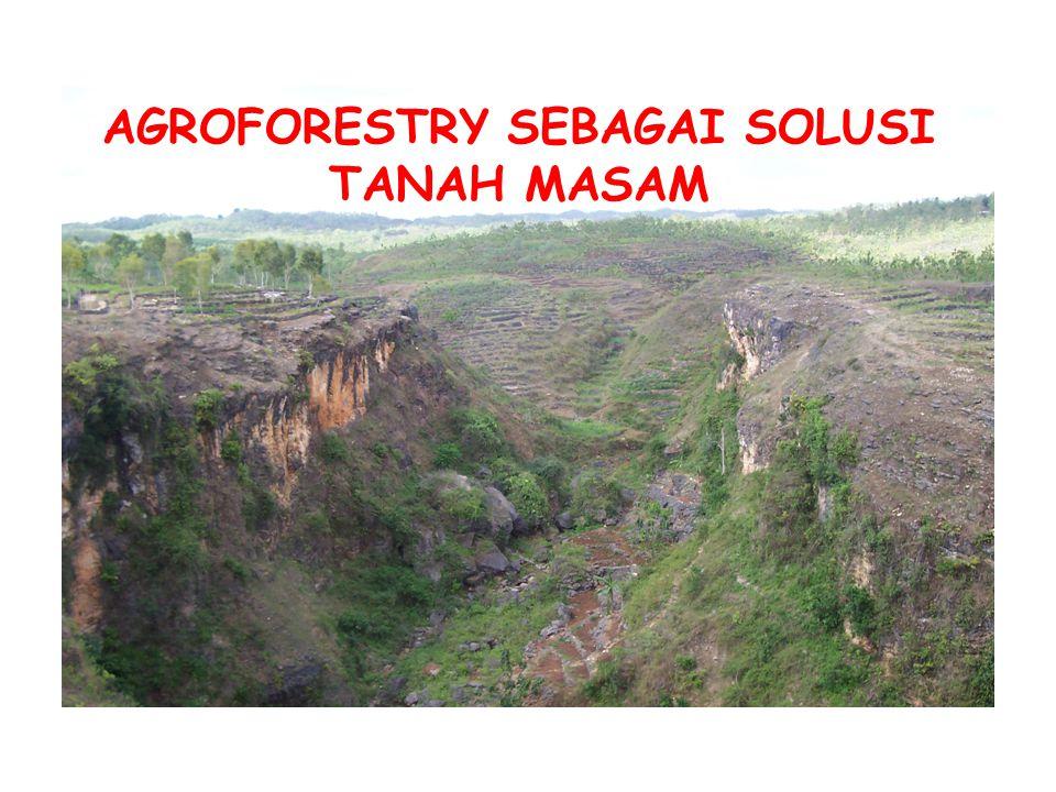AGROFORESTRY SEBAGAI SOLUSI TANAH MASAM
