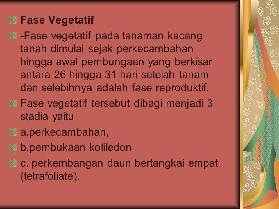 Fase Vegetatif -Fase vegetatif pada tanaman kacang tanah dimulai sejak perkecambahan hingga awal pembungaan yang berkisar antara 26 hingga 31 hari set