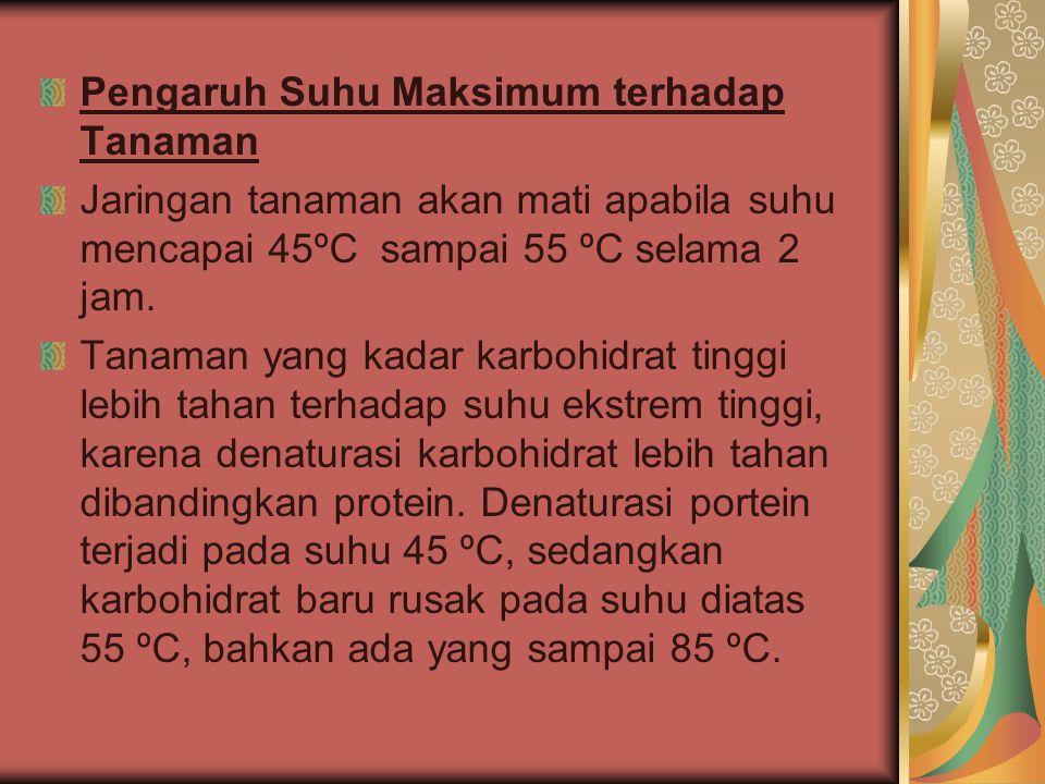 Pengaruh Suhu Maksimum terhadap Tanaman Jaringan tanaman akan mati apabila suhu mencapai 45ºC sampai 55 ºC selama 2 jam.