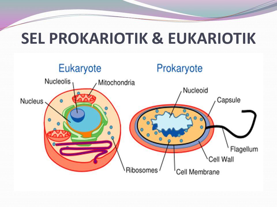 LISOSOM Merupakan organel yang memakan bagian sel.