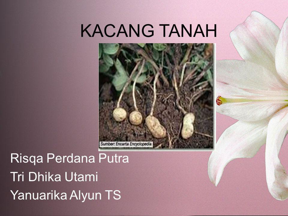 KACANG TANAH Risqa Perdana Putra Tri Dhika Utami Yanuarika Alyun TS