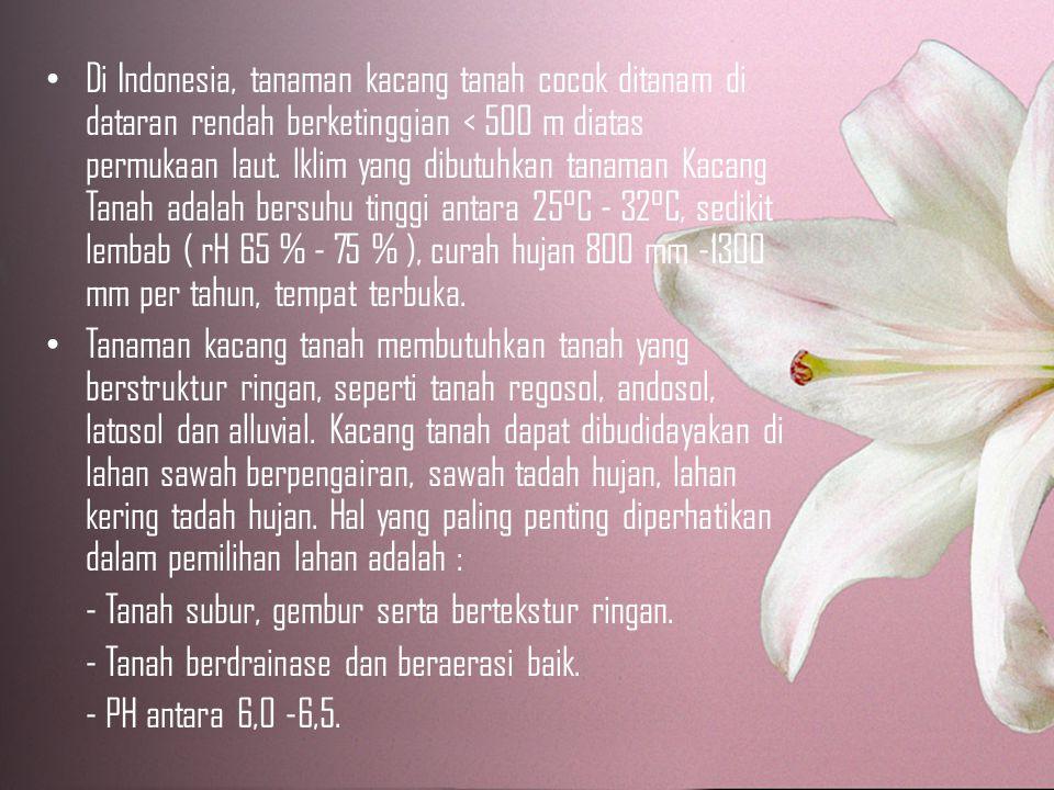Di Indonesia, tanaman kacang tanah cocok ditanam di dataran rendah berketinggian < 500 m diatas permukaan laut.