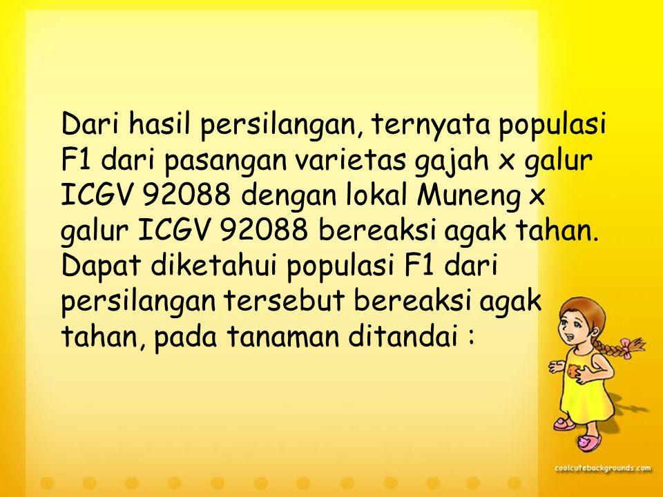 1.G7 = Populasi F1 dari Gajah x PI-4056132 2.G8 = Populasi F1 dari Gajah x ICGV 92088 3.G9 = Populasi F1 dari Gajah x ICGV 87358 4.G10 = Populasi F1 dari Gajah x ICGV 91227 5.G11 = Populasi F1 dari Muneng x PI-405132 6.G12 = Populasi F1 dari Muneng x ICGV 92088 7.G13 = Populasi F1 dari Muneng x ICGV 87358 8.G14 = Populasi F1 dari Muneng x ICGV 91227