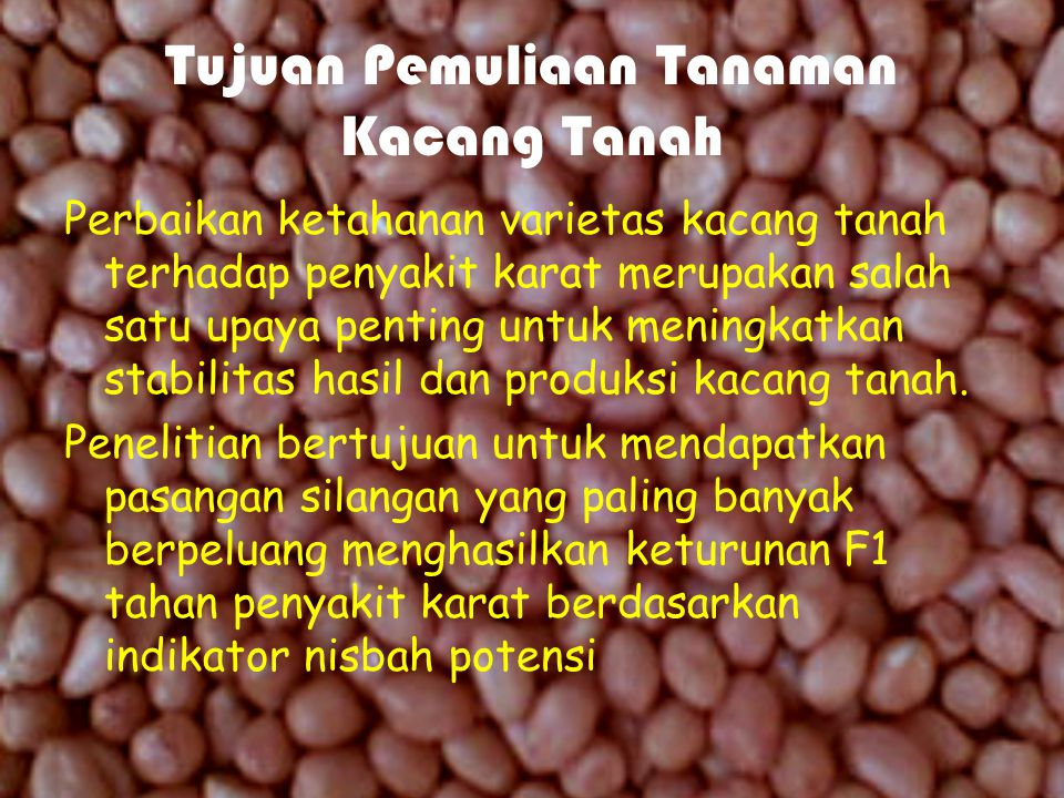 Permasalahan Budidaya Tanaman Kacang Low peanut productivity is one of the problems of peanut cultivation in Indonesia. This is due to the attack of r