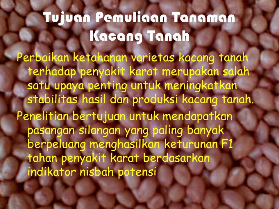 Tujuan Pemuliaan Tanaman Kacang Tanah Perbaikan ketahanan varietas kacang tanah terhadap penyakit karat merupakan salah satu upaya penting untuk meningkatkan stabilitas hasil dan produksi kacang tanah.