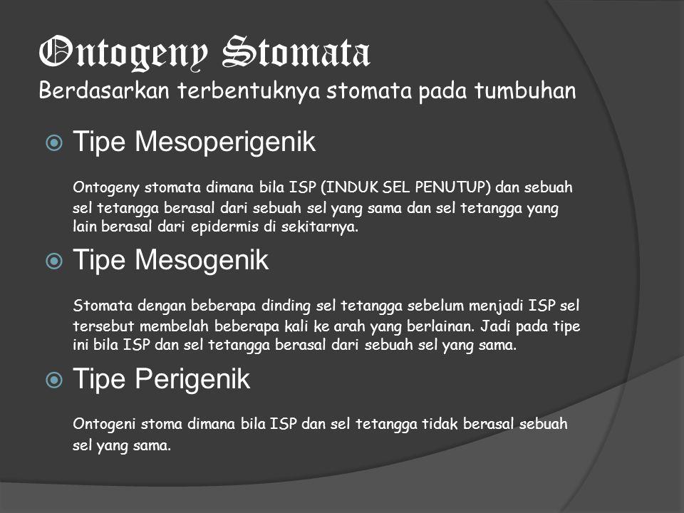 Ontogeny Stomata Berdasarkan terbentuknya stomata pada tumbuhan  Tipe Mesoperigenik Ontogeny stomata dimana bila ISP (INDUK SEL PENUTUP) dan sebuah sel tetangga berasal dari sebuah sel yang sama dan sel tetangga yang lain berasal dari epidermis di sekitarnya.