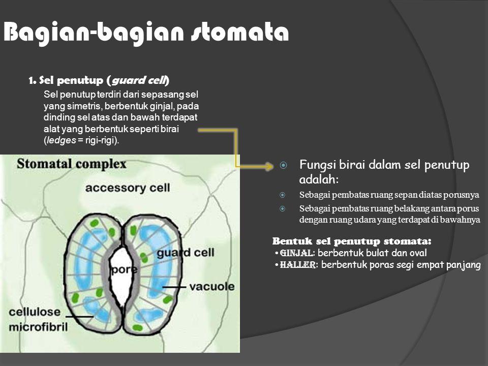 Bagian-bagian stomata 1.