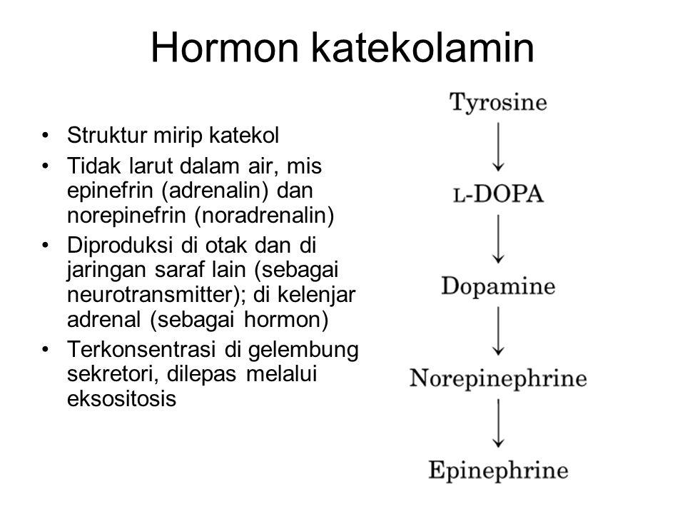 Hormon katekolamin Struktur mirip katekol Tidak larut dalam air, mis epinefrin (adrenalin) dan norepinefrin (noradrenalin) Diproduksi di otak dan di j