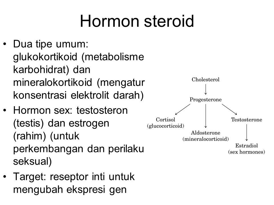 Hormon steroid Dua tipe umum: glukokortikoid (metabolisme karbohidrat) dan mineralokortikoid (mengatur konsentrasi elektrolit darah) Hormon sex: testo