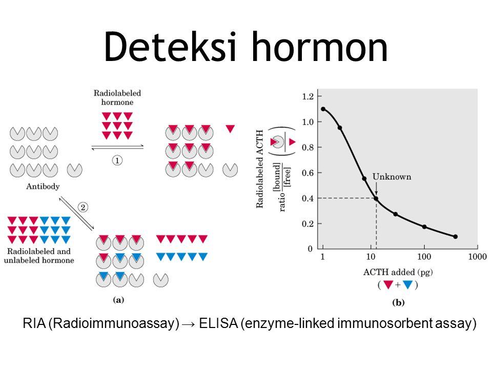 Tipe interaksi hormon – reseptor 1.Perubahan potensial membran → mengakibatkan buka/tutup saluran ion 2.Reseptor enzim diaktifkan oleh hormon ekstrasel 3.Pembawa pesan kedua (cAMP/ITP) dihasilkan di dalam sel, sebagai regulator enzim 4.Adesi reseptor pada permukaan sel berinteraksi molekul ekstrasel dan menjelaskan informasi ke sitoskeleton 5.Molekul steroid atau mirip steroid mengakibatkan perubahan ekspresi gen