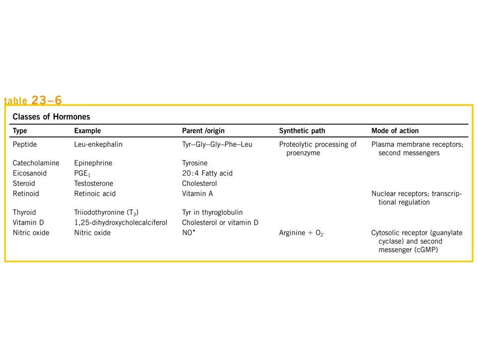 Hormon peptida (3 – 200 asam amino) Pankreas, misal insulin, glukagon, dan somatostatin Hipotalamus dan pituitari