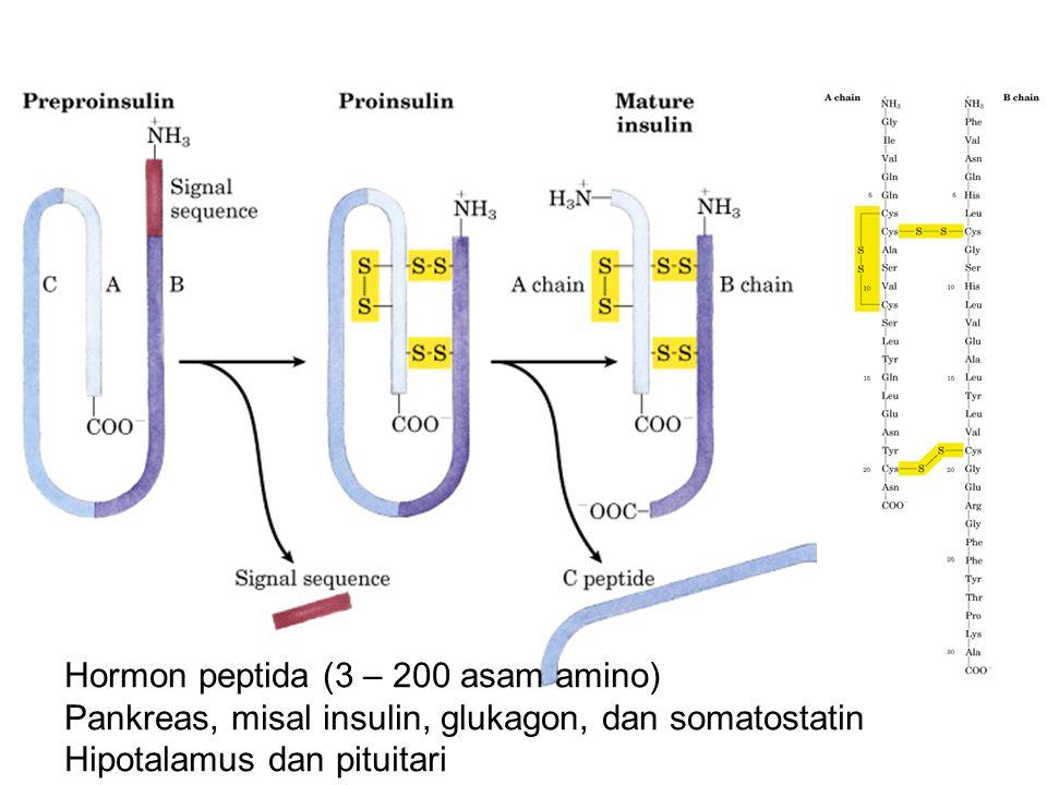 Satu gen, banyak hormon Hormon-hormon menstimulasi melanosit