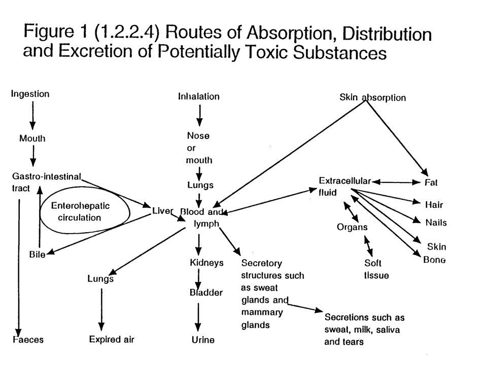 - Kerja Teratogenik - Reaksi Hipersensitif ( Reaksi alergi) Reaksi fotoalergik Sensibilisasi cahaya Reaksi fototoksis