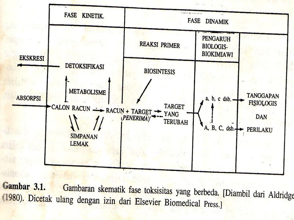 Fase Toksodinamik : Suatu kerja zat toksis pada umumnya adalah hasil interaksi dari sejumlah proses yang sangat rumit dan kompleks.