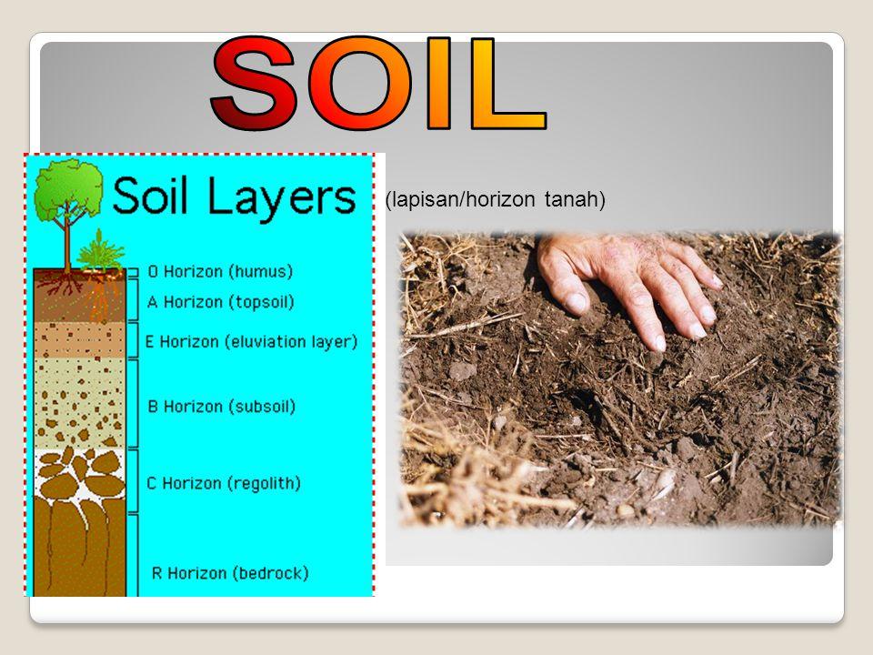 Mekanisme penyerapan hara oleh akar Kebanyakan unsur diserap akar tanaman dalam bentuk anorganik.