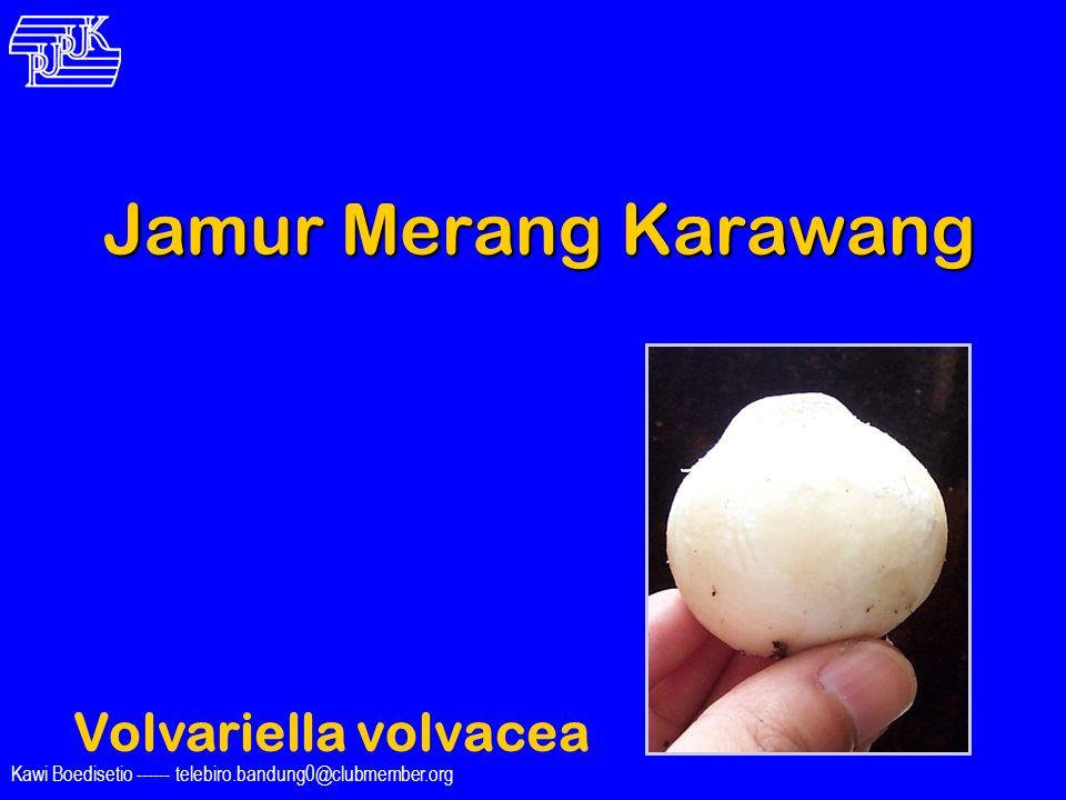 Kawi Boedisetio ------ telebiro.bandung0@clubmember.org Jamur Merang Karawang Volvariella volvacea Wieke Irawati Kodri fe_bandung@yahoo.com