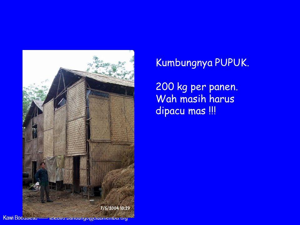 Kawi Boedisetio ------ telebiro.bandung0@clubmember.org Kumbungnya PUPUK. 200 kg per panen. Wah masih harus dipacu mas !!!