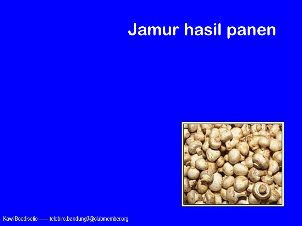 Kawi Boedisetio ------ telebiro.bandung0@clubmember.org Jamur