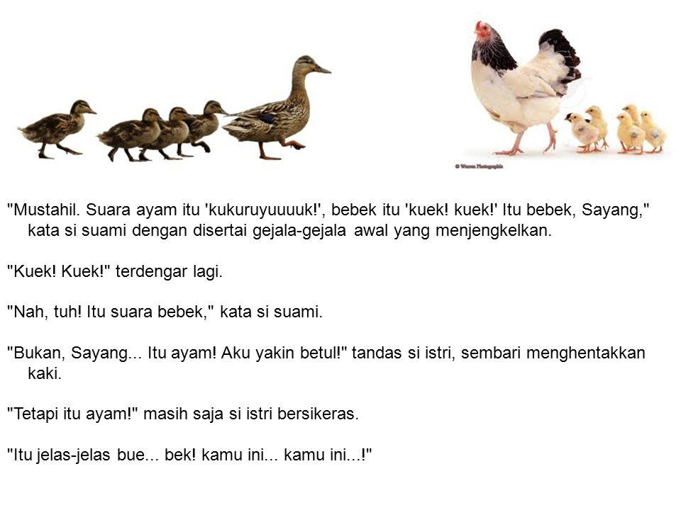 Mustahil.Suara ayam itu kukuruyuuuuk! , bebek itu kuek.