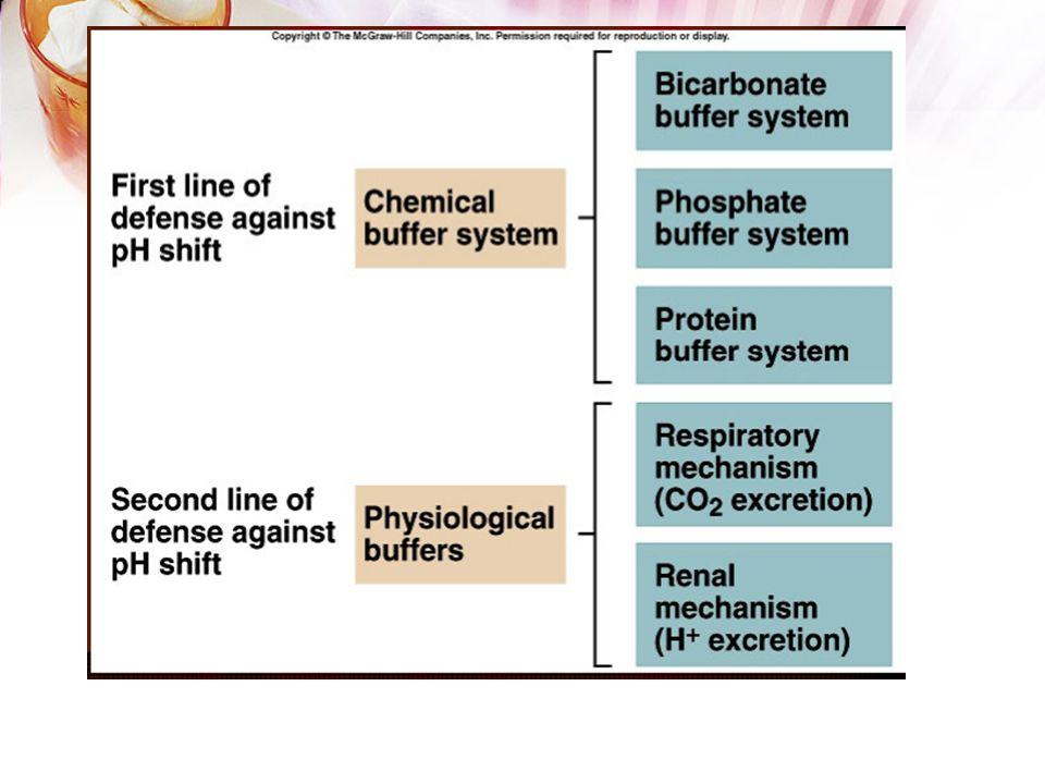 Regulator PH 3 sistem yg berperan dlm menjaga homeostasis PH : Sistem buffer dr plasma, cairan tubuh & sel (eritrosit) Paru  regulasi CO2 Ginjal  re
