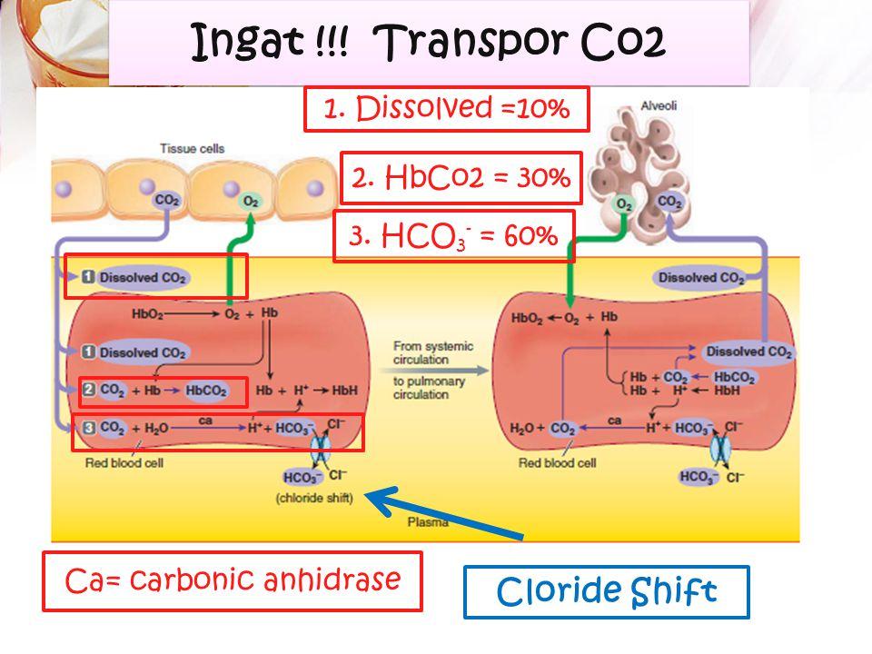 Di Paru : Asam karbonat akan terurai kembali menjadi CO2 dan H2O dikatalisis oleh enzim karbonik anhidrase H2CO3 CO2 + H2O Karbonik anhidrase Regulasi