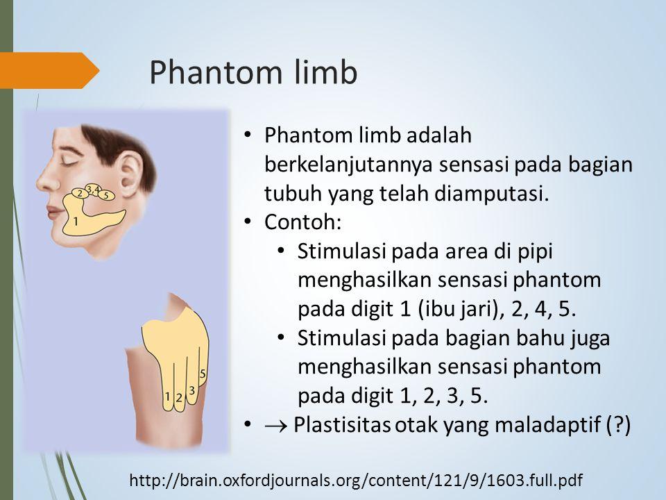 Phantom limb Phantom limb adalah berkelanjutannya sensasi pada bagian tubuh yang telah diamputasi. Contoh: Stimulasi pada area di pipi menghasilkan se