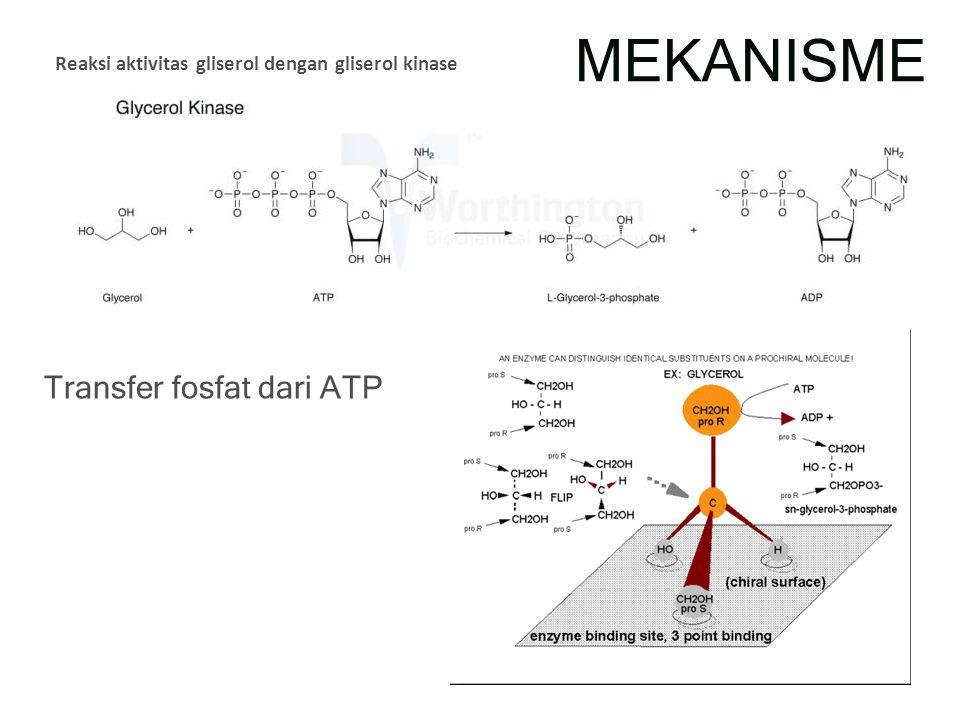 MEKANISME Reaksi aktivitas gliserol dengan gliserol kinase Transfer fosfat dari ATP