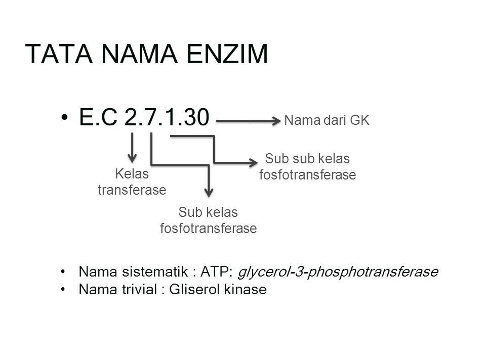 E.C 2.7.1.30 Nama sistematik : ATP: glycerol-3-phosphotransferase Nama trivial : Gliserol kinase TATA NAMA ENZIM Kelas transferase Sub kelas fosfotransferase Sub sub kelas fosfotransferase Nama dari GK