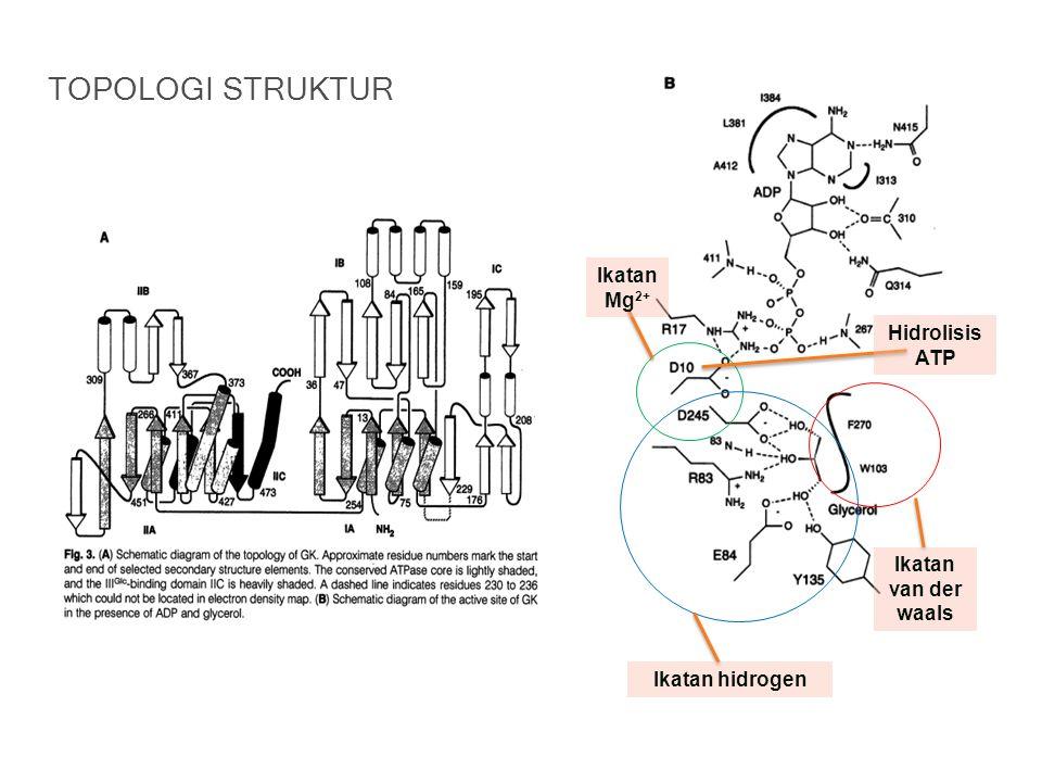 Ikatan hidrogen Ikatan van der waals Ikatan Mg 2+ Hidrolisis ATP TOPOLOGI STRUKTUR
