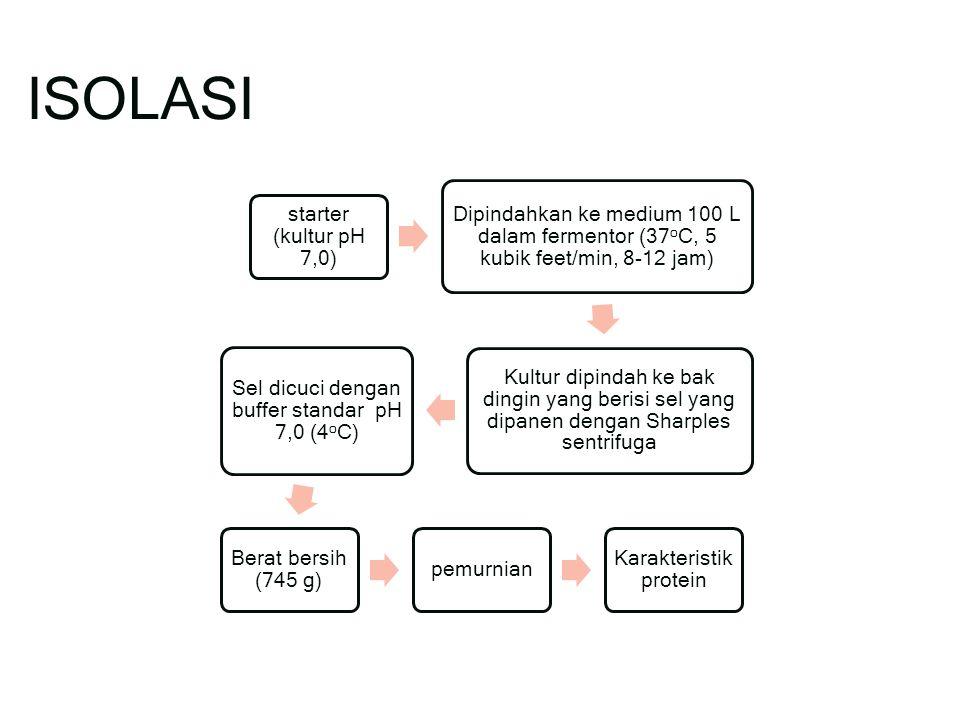 ISOLASI starter (kultur pH 7,0) Dipindahkan ke medium 100 L dalam fermentor (37 o C, 5 kubik feet/min, 8-12 jam) Kultur dipindah ke bak dingin yang berisi sel yang dipanen dengan Sharples sentrifuga Sel dicuci dengan buffer standar pH 7,0 (4 o C) Berat bersih (745 g) pemurnian Karakteristik protein