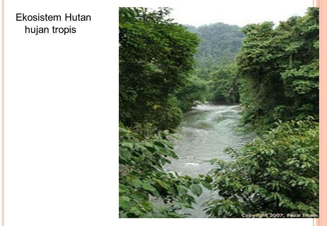 Ekosistem Hutan hujan tropis