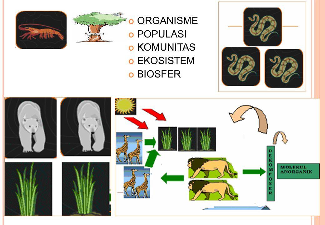 PEMBAGIAN EKOLOGI Autoekologi: ilmu yang mempelajari hubungan antara satu individu atau satu spesies dengan alam lingkunganya.