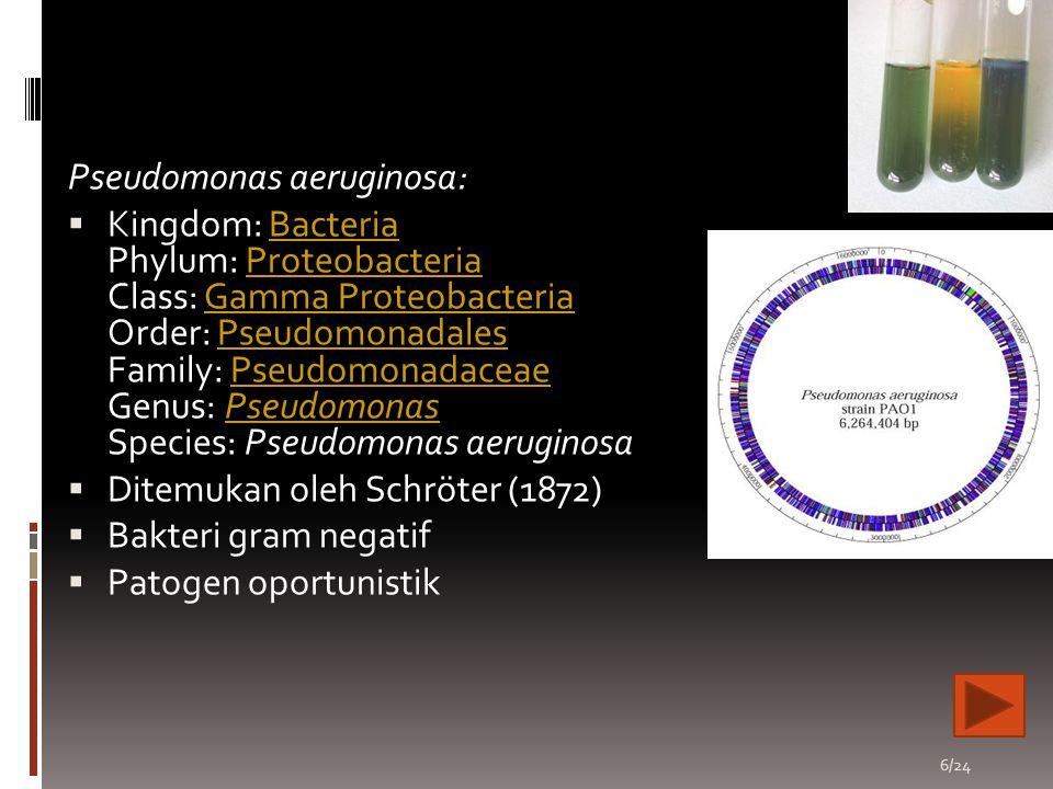 17/24 Pemindahan bakteri dari media LB padat ke media MM cair (starter)~suhu 37o C 150 rpm Inokulasi pada media MM + glukosa - NH4Cl + pnp 100 ppm~suhu 37o C 150 rpm Pengukuran OD pada 600 nm dan diperoleh hasil