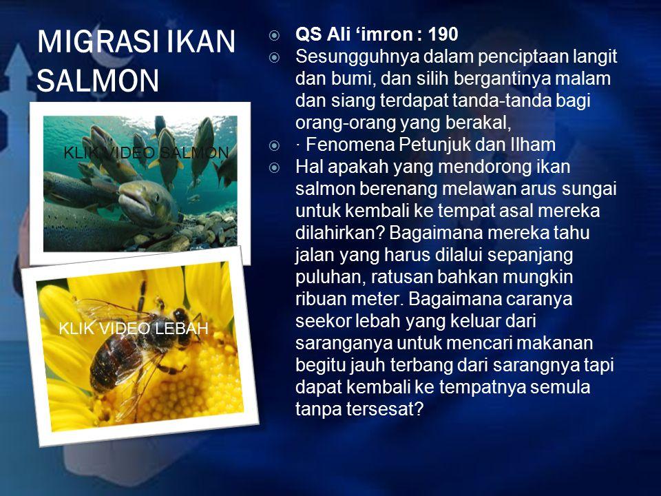 MIGRASI IKAN SALMON  QS Ali 'imron : 190  Sesungguhnya dalam penciptaan langit dan bumi, dan silih bergantinya malam dan siang terdapat tanda-tanda