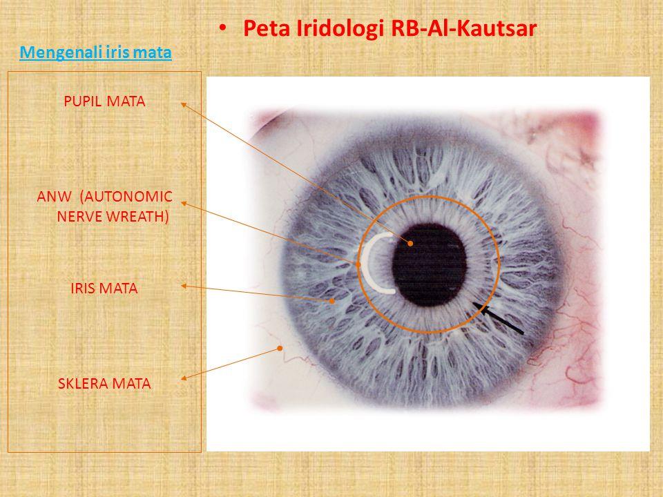 Keterangan Zona Iris Peta Iridologi RB-Al-Kautsar Perut (Abdomen) …………………………………1 Usus (Colon) …………………………………………2 Jantung, Bronchial, Pankreas, Adrenal,
