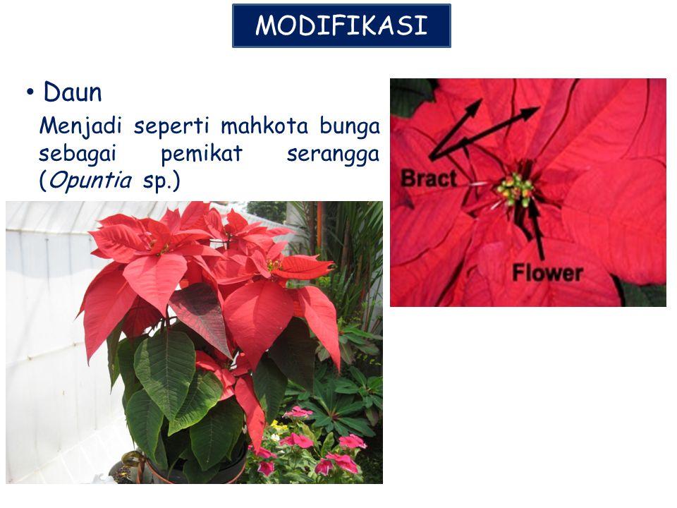 MODIFIKASI Daun Menjadi seperti mahkota bunga sebagai pemikat serangga (Opuntia sp.)