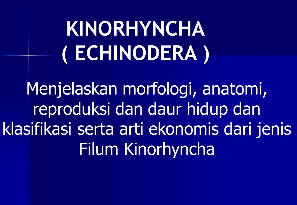 KINORHYNCHA ( ECHINODERA ) Menjelaskan morfologi, anatomi, reproduksi dan daur hidup dan klasifikasi serta arti ekonomis dari jenis Filum Kinorhyncha