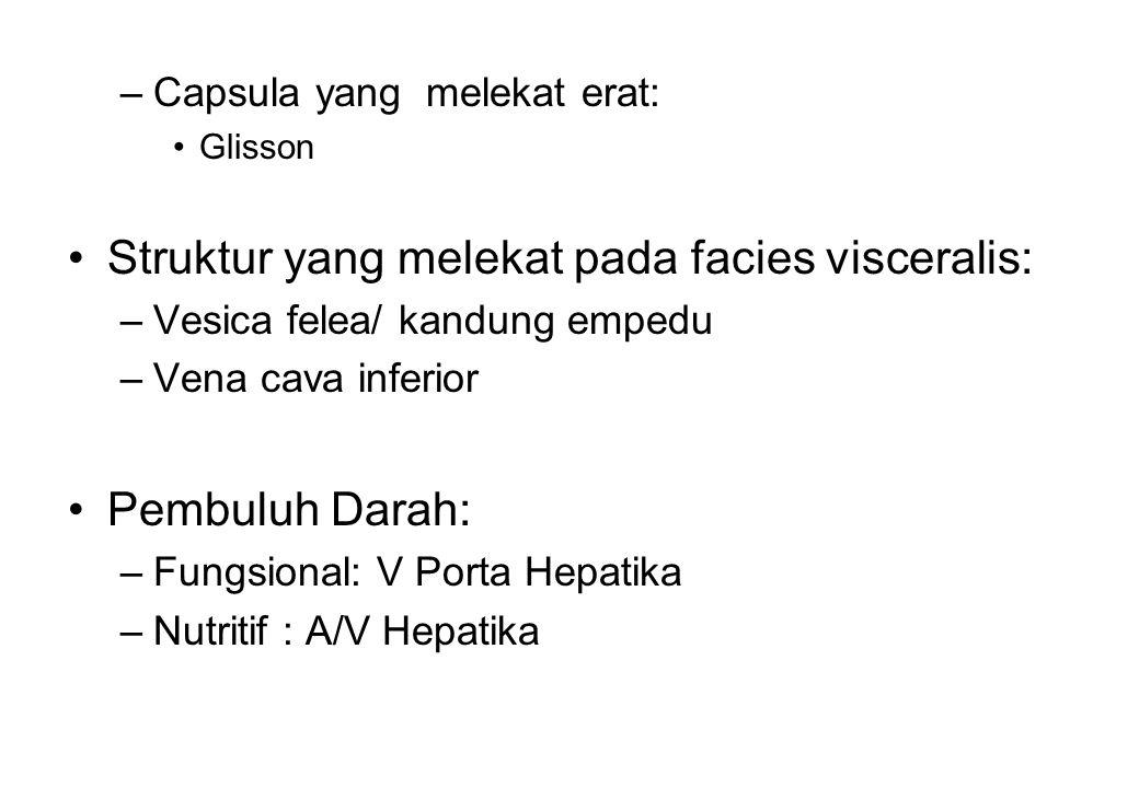 –Capsula yang melekat erat: Glisson Struktur yang melekat pada facies visceralis: –Vesica felea/ kandung empedu –Vena cava inferior Pembuluh Darah: –F