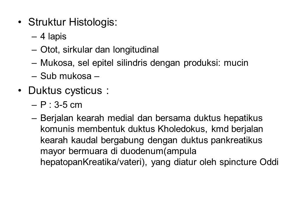 Struktur Histologis: –4 lapis –Otot, sirkular dan longitudinal –Mukosa, sel epitel silindris dengan produksi: mucin –Sub mukosa – Duktus cysticus : –P