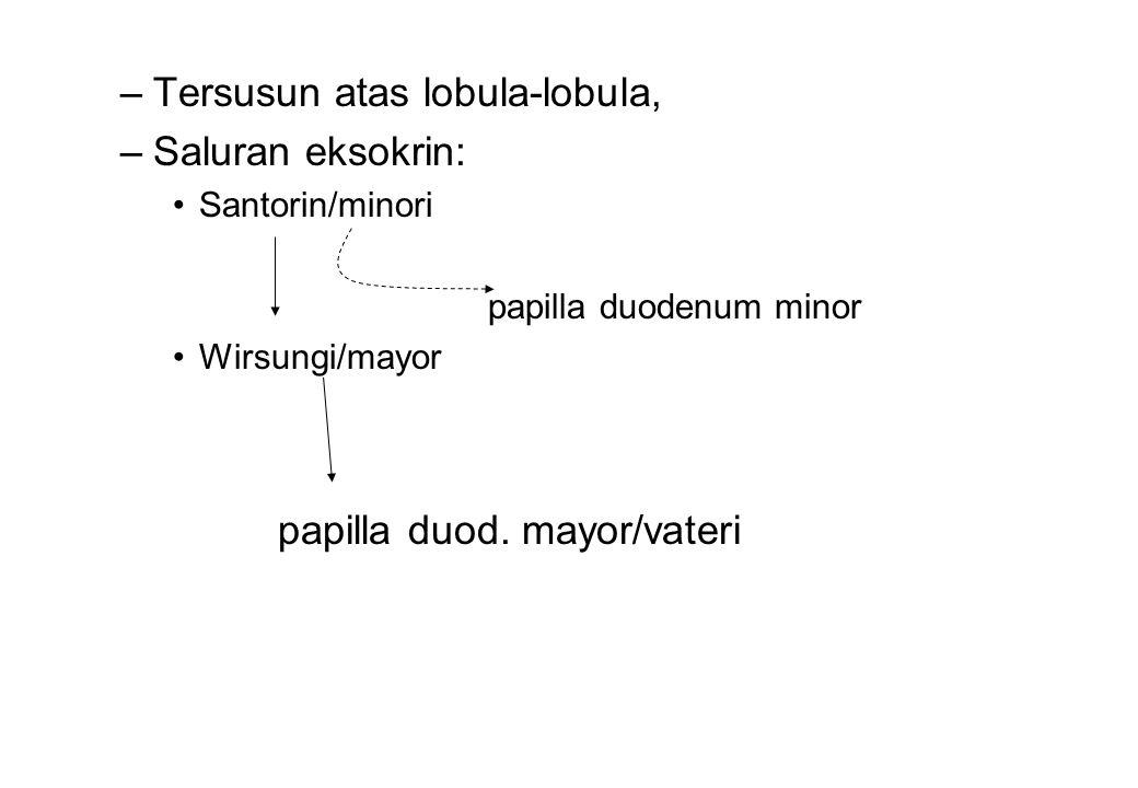 –Tersusun atas lobula-lobula, –Saluran eksokrin: Santorin/minori papilla duodenum minor Wirsungi/mayor papilla duod. mayor/vateri