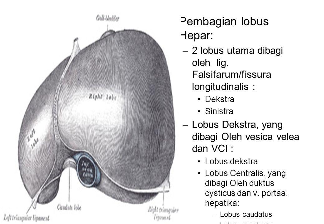 Pembagian lobus Hepar: –2 lobus utama dibagi oleh lig. Falsifarum/fissura longitudinalis : Dekstra Sinistra –Lobus Dekstra, yang dibagi Oleh vesica ve