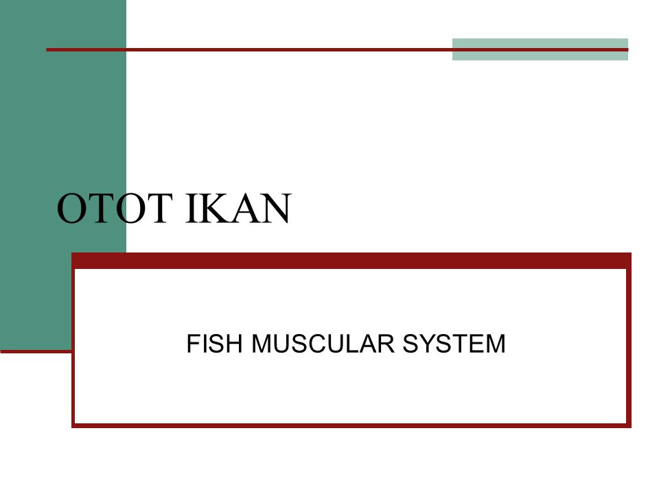 OTOT IKAN FISH MUSCULAR SYSTEM