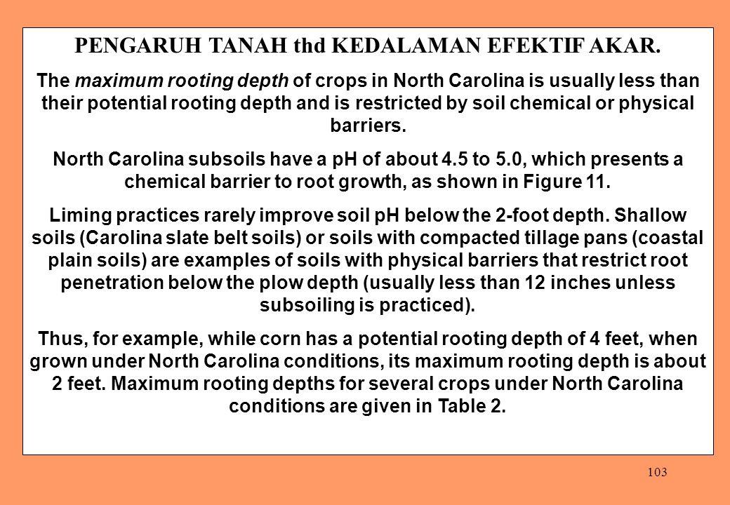103 PENGARUH TANAH thd KEDALAMAN EFEKTIF AKAR. The maximum rooting depth of crops in North Carolina is usually less than their potential rooting depth