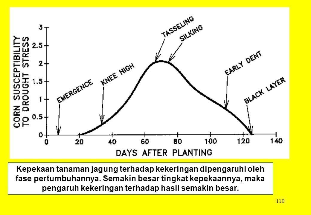 110 Kepekaan tanaman jagung terhadap kekeringan dipengaruhi oleh fase pertumbuhannya. Semakin besar tingkat kepekaannya, maka pengaruh kekeringan terh