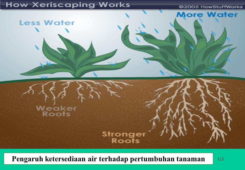 121 Pengaruh ketersediaan air terhadap pertumbuhan tanaman